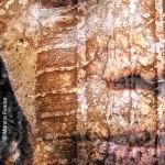 We are Textured – Self Portrait VI